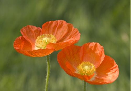 Arılar-Çiçekler 11