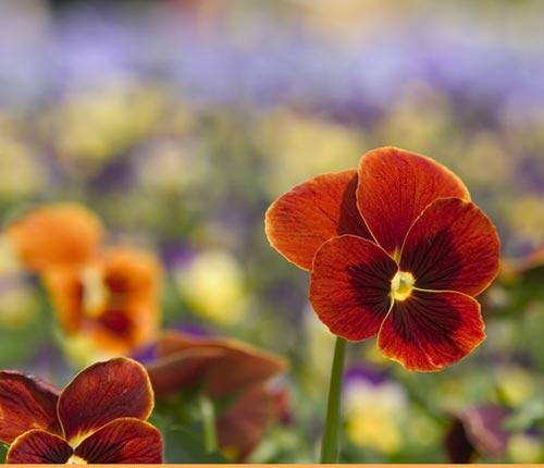 Arılar-Çiçekler 12