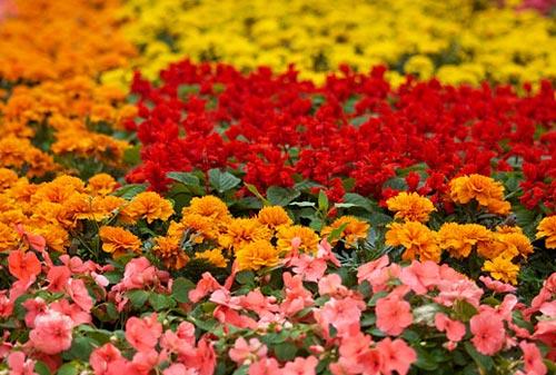 Arılar-Çiçekler 16