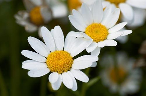 Arılar-Çiçekler 17