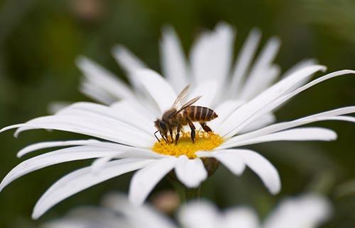 Arılar-Çiçekler 18