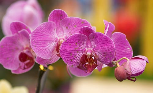 Arılar-Çiçekler 19