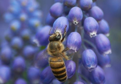 Arılar-Çiçekler 2
