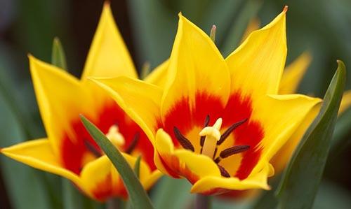 Arılar-Çiçekler 21