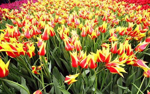 Arılar-Çiçekler 22