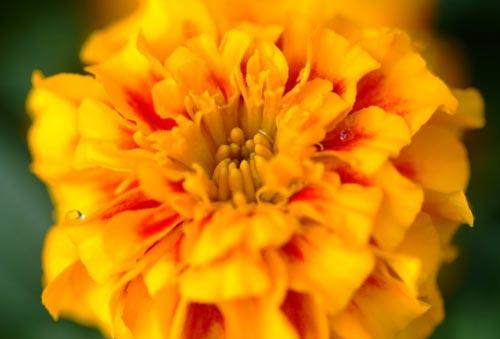 Arılar-Çiçekler 23