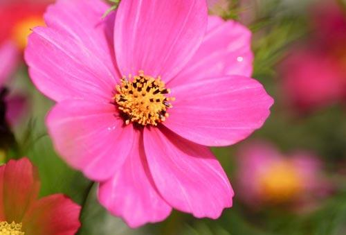 Arılar-Çiçekler 24