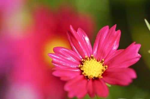 Arılar-Çiçekler 25