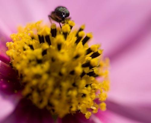 Arılar-Çiçekler 5