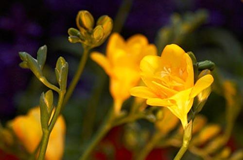 Arılar-Çiçekler 6