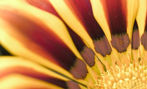 Arılar-Çiçekler 8
