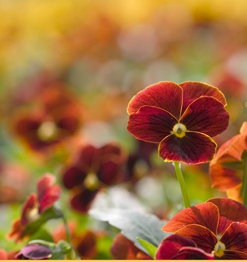 Arılar-Çiçekler 9