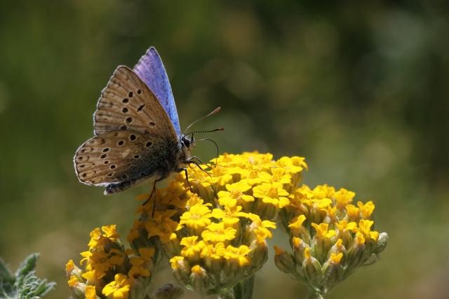 Kelebek kitabında yazan Esma-i Hüsna 1