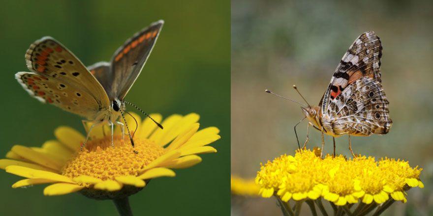 Kelebek kitabında yazan Esma-i Hüsna