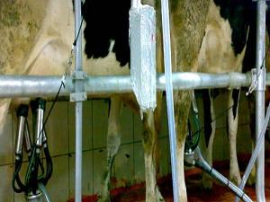 Ocak'ta 710 bin 22 ton inek sütü toplandı