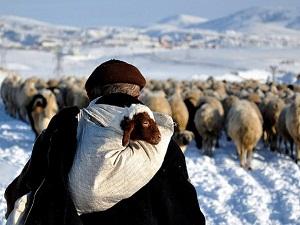 Aksaray'da 3'üncü çobanlık okulu açıldı