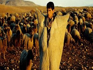 'Çobanlık' mesleğinin adı 'Sürü Yöneticiliği' oldu