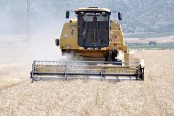 Buğday veriminde Türkiye 61. sırada