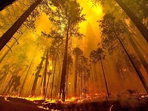 Orman yangınlarıyla mücadelede dünya lideriyiz