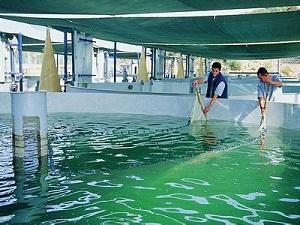 Beyşehir Gölü'nde Su Ürünleri Av Yasağı Başlıyor