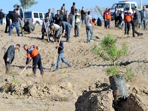 Şahinbey'e 5 yılda 290 bin ağaç dikildi