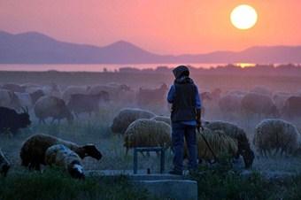 Artık her önüne gelen çoban olamayacak