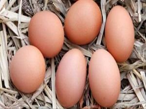 Yumurtanın Fiyatı Tavan Yaptı