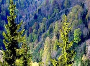 TZOB Bayraktar: Ormancılık ürünleri yüzde 13,07 arttı