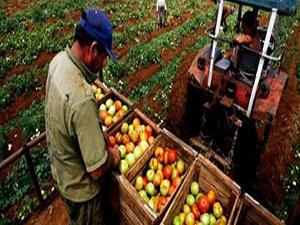Çiftçilere 'yalancı bahar' uyarısı
