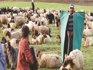 Çobanlık, sertifikalı meslek oluyor