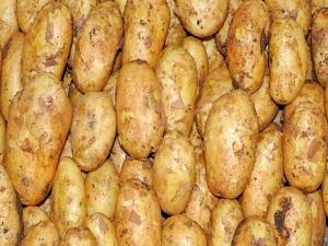 Patatesteki korkutan artış, kilosu 5 lirayı bulabilir