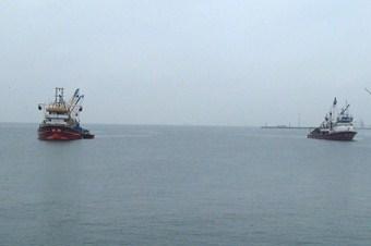 İstavritler, balıkçıları peşinden Tekirdağ'a getirdi