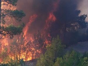 Mersin'de geçen yıl çıkan 987 yangında 509 hektar alan yandı
