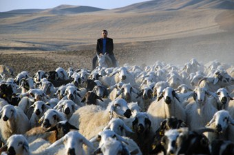Sertifikalı çoban olmak için 760 kişi başvurdu