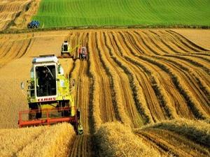 Tarım alanları yok oluyor!