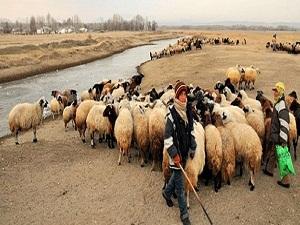 Üç bin lira maaşla çoban bulamıyorlar
