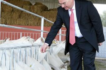 Koyun ve keçi sütünde de referans fiyat isteniyor