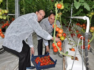 Sıcak suyla ısıtılan seralarda ürünler hasat edildi