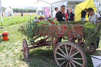 Bursa'da 'Beşirli 77 kırmızı soğanı' yetiştirilecek