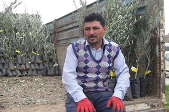 Marmaris'te 15 bin zeytin fidanı dağıtılıyor