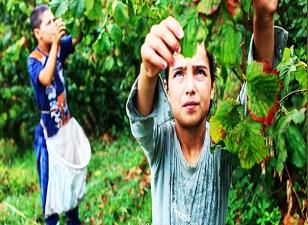 Fındıkta ihracat geliri azaldı