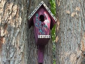 Belediyeden kuşlara ev