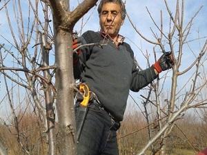 Şimdi Ağaçlarda Budama Zamanı