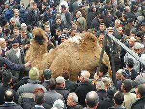 Kuraklığa karşı 2 deve kurban edildi
