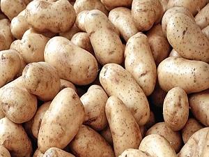 Patateste ithalata ihtiyacımız yok