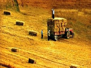 Tarımda çalışanların sağlığı mercek altında