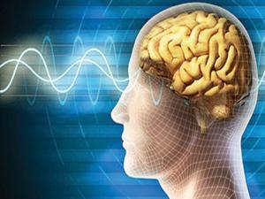 Beyinde 'iyi karar alan' bölüm keşfedildi
