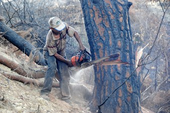 Manavgat'ta ormanlık alanlardan kaçak ağaç kesimi sona erdi
