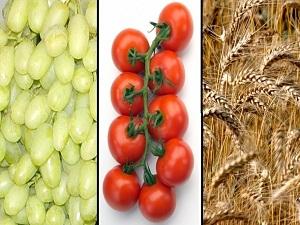 Türkiye tarım sektöründe en çok buğday, üzüm ve domates ihraç ediyor