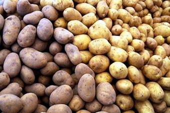 Niğde'de Kuraklığa Dayanıklı Patates Türü Geliştirilecek